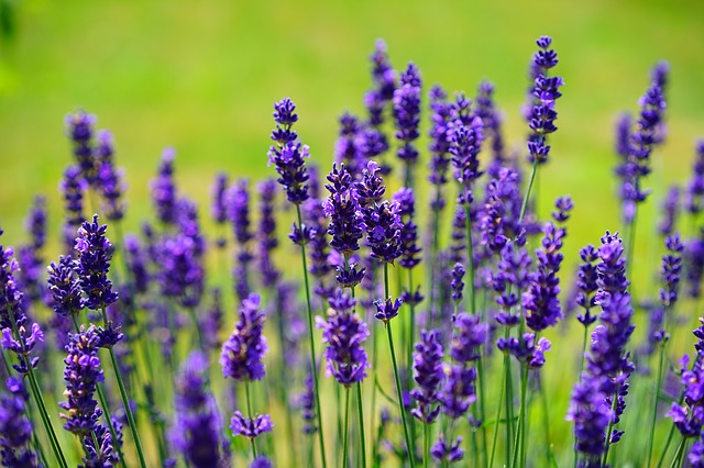 The Positive Use Of Herbs For Health And Well Being